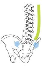 背中が丸くなると、仙腸関節にかかる圧力が弱まり、骨盤が弛んでしまう(開いてしまう)。