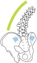 背中を伸ばすと、仙腸関節に圧力がかかり、骨盤は締まる。